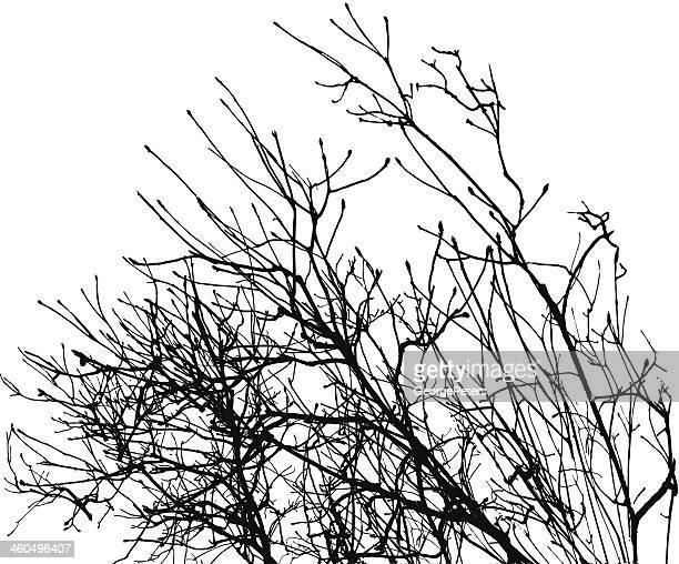 illustrations, cliparts, dessins animés et icônes de silhouette de branches en hiver - arbre sans feuillage