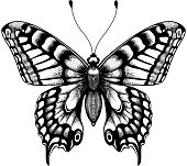 Silhouette of butterfly. Tattoo butterfly. Isolated vector sketch of butterfly