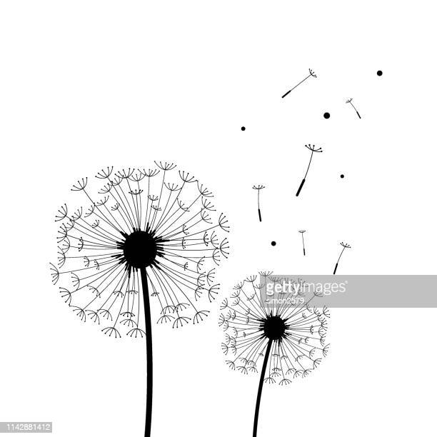 silhouette of dandelion in black and white - wildflower stock illustrations