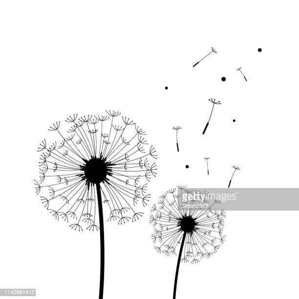 illustrations, cliparts, dessins animés et icônes de silhouette de pissenlit en noir et blanc - fleurs des champs