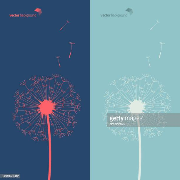 illustrazioni stock, clip art, cartoni animati e icone di tendenza di silhouette of dandelion in blue and green color background - motivo floreale
