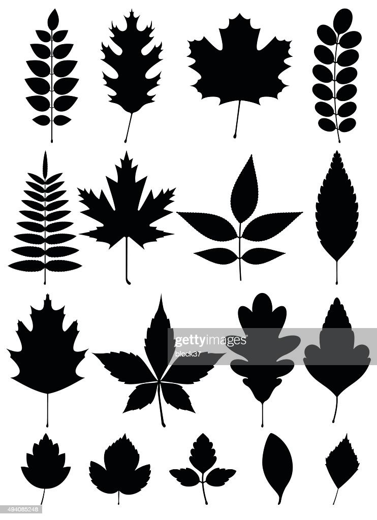 silhouette of different leaves