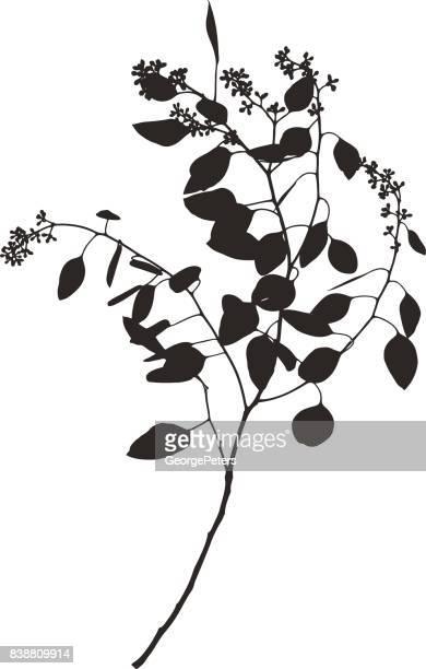 ユーカリの幹、葉や芽のシルエット - ユーカリの葉点のイラスト素材/クリップアート素材/マンガ素材/アイコン素材