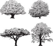 Silhouette of four different breeds of trees