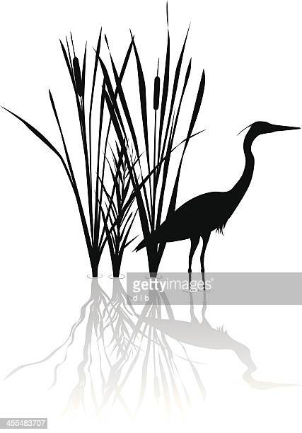 bildbanksillustrationer, clip art samt tecknat material och ikoner med silhouette of great blue heron with reflections - sumpmark