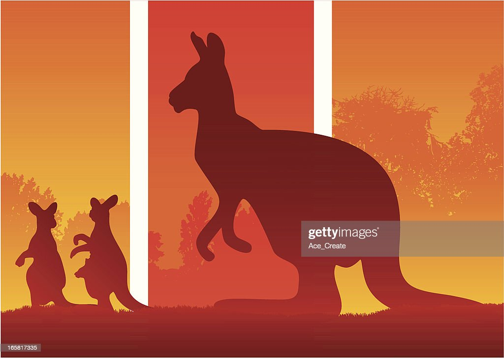 Silhouette of Kangaroos in the australian wild bush