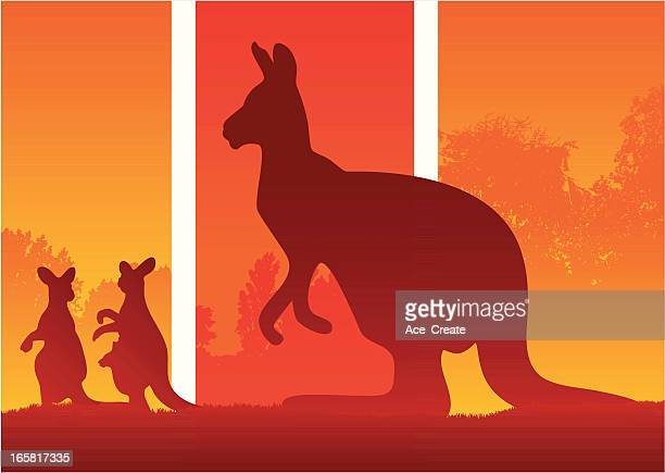 silhouette of kangaroos in the australian wild bush - australia day stock illustrations
