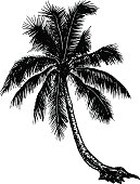 silhouette tropical palm trees on a blank background