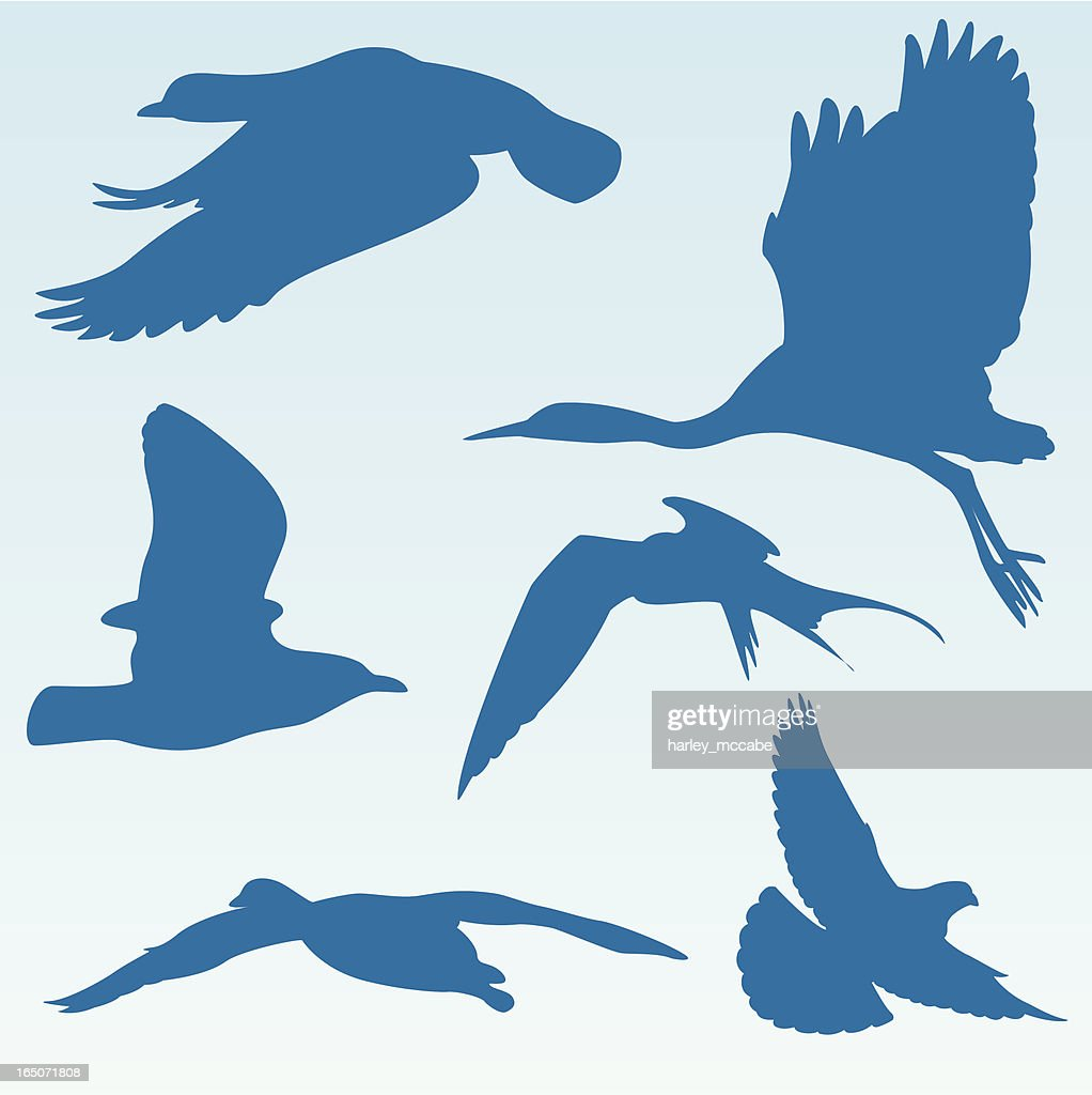 Silhouetted Birds in Flight