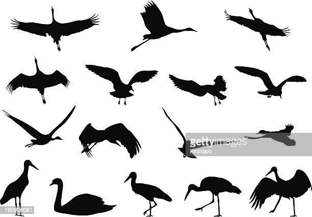 silhouettes - birds - crane bird stock illustrations