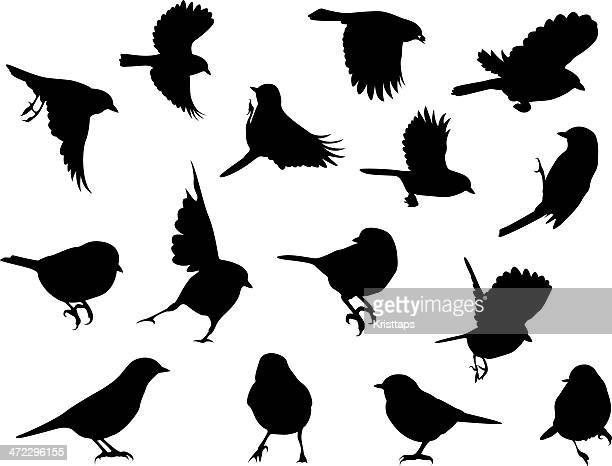 Silhouettes – Birds