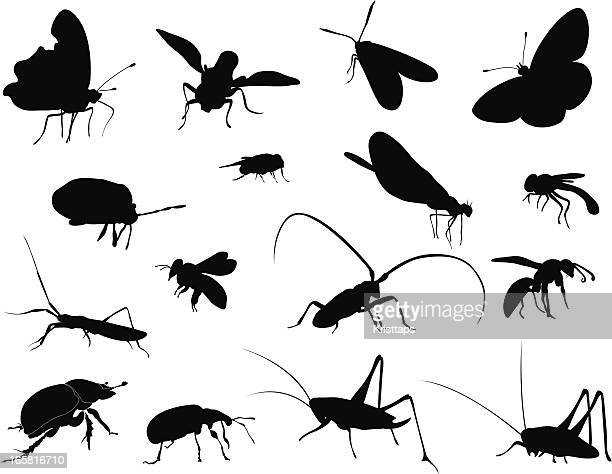 silhouettes - insects - insect stock illustrations