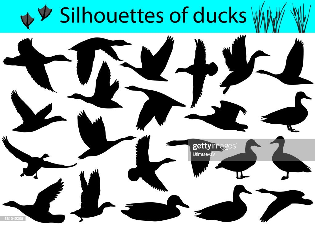 Silhouettes of ducks