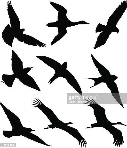 illustrations, cliparts, dessins animés et icônes de des oiseaux - hirondelle