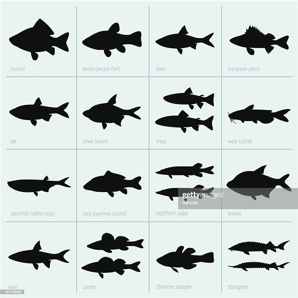 Silhouettes of fresh water fish