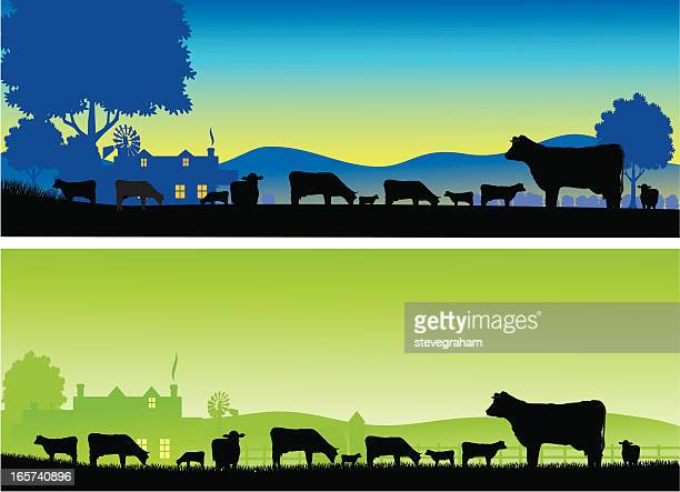 Silhouettes of grazing cows on a farm at dawn and dusk