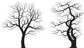 Silhouettes of old huge trees over white background.