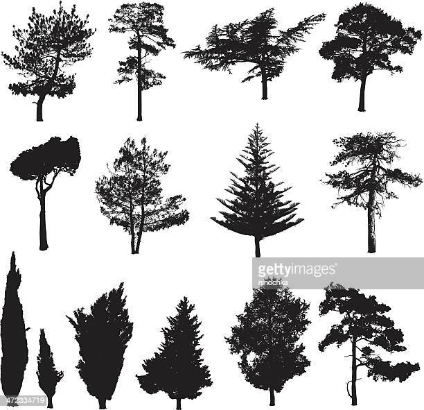 silhouettes of pines - coniferous tree stock illustrations, clip art, cartoons, & icons