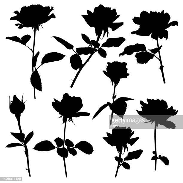 silhouettes of roses - rosa stock illustrations