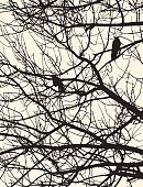 silhouettes of the crows on the tree branches
