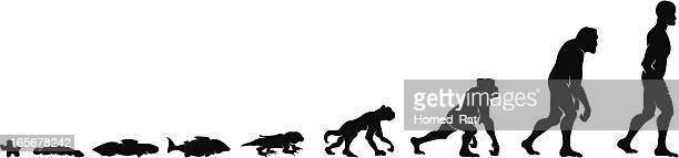Silhouettes of the evolution of humankind