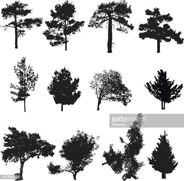 Siluetas de árboles