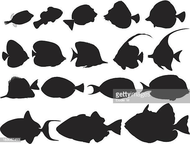 silhouettes of tropical fishes / poissons tropicaux ombragés - acanthuridae stock illustrations, clip art, cartoons, & icons