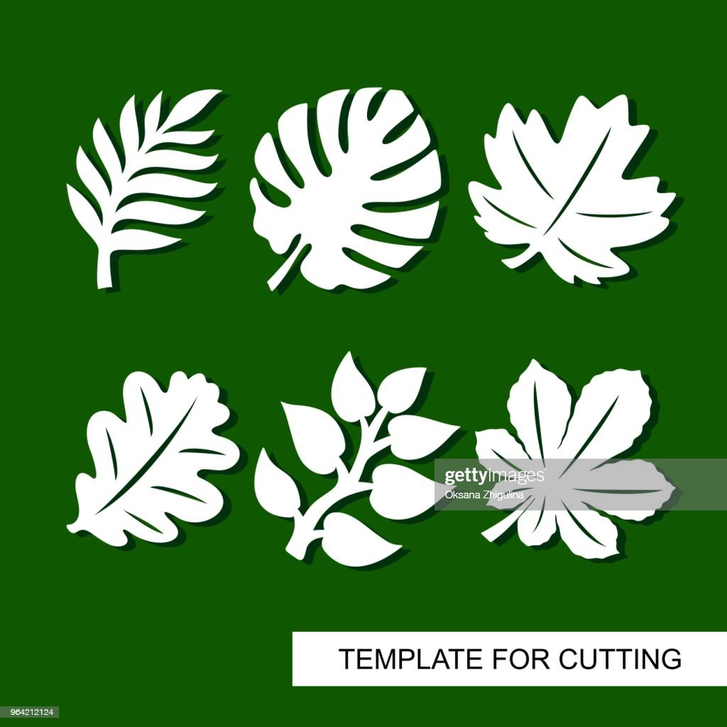 Silhouettes of tropical palm leaves, monstera, jungle leaves, leaves maple, oak, chestnut.