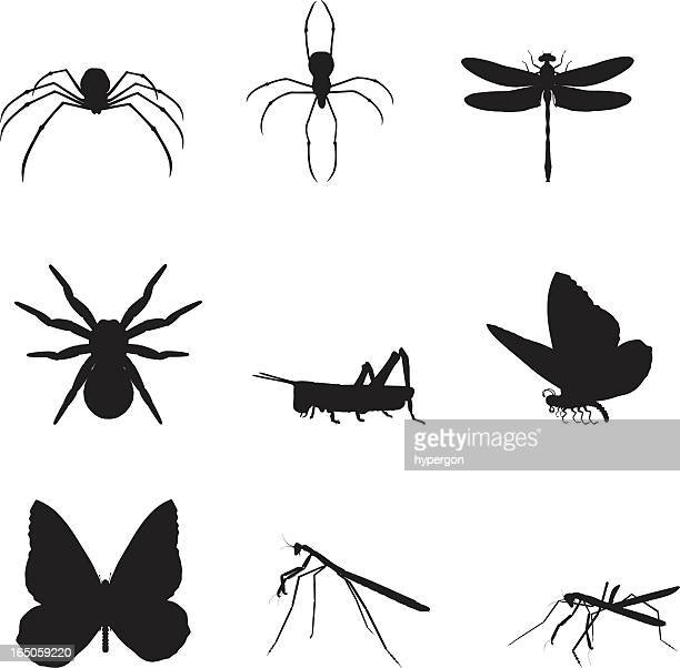 Silhouettes of various insects on a white background