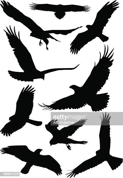 silhouettes of wild birds in flight - flying stock illustrations
