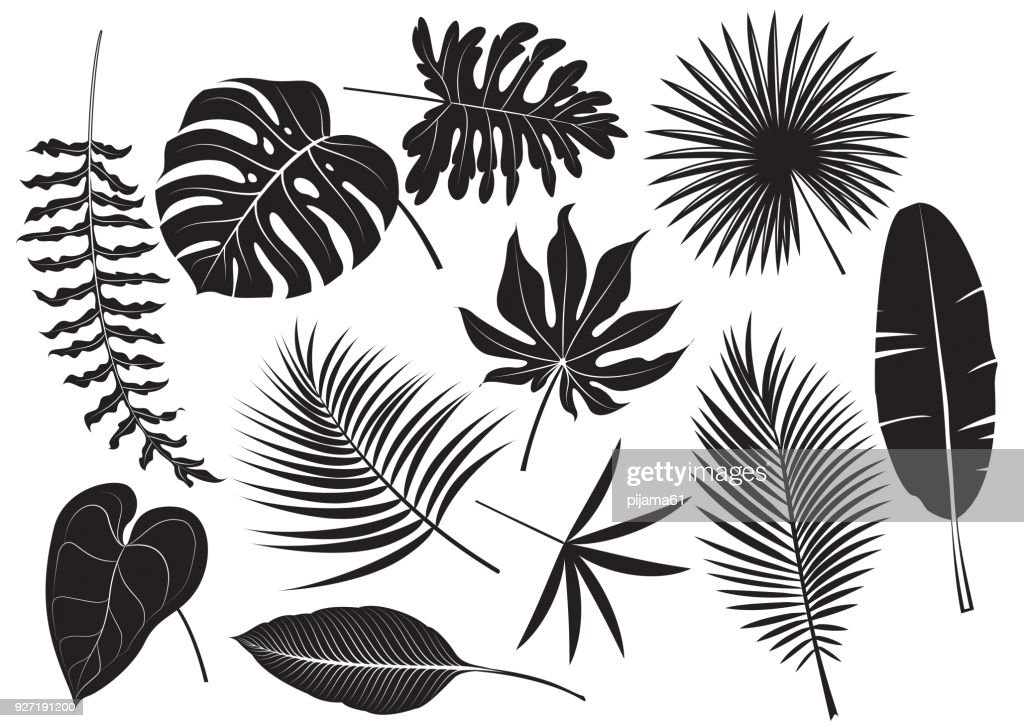 Silhouettes tropical plants : stock illustration