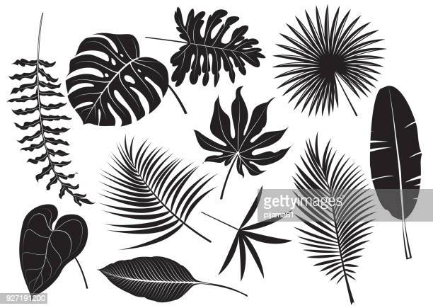 silhouettes tropical plants - palm tree stock illustrations