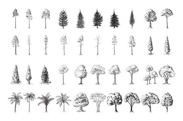 Free pineapple tree Images, Pictures, and Royalty-Free