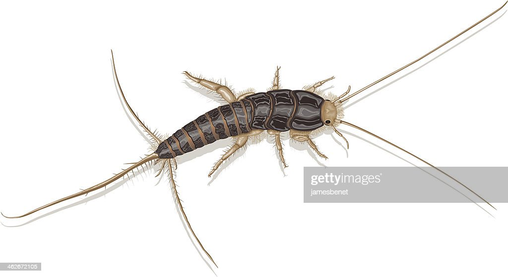 Silverfish : Stock Illustration