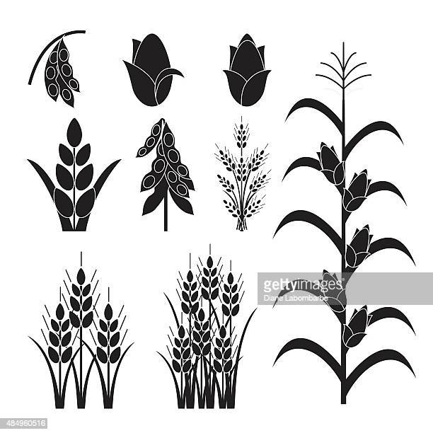 simple agricultural crops icons - corn stock illustrations, clip art, cartoons, & icons