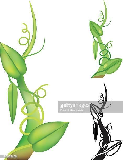 einfache beanstalk - bohnenranke stock-grafiken, -clipart, -cartoons und -symbole