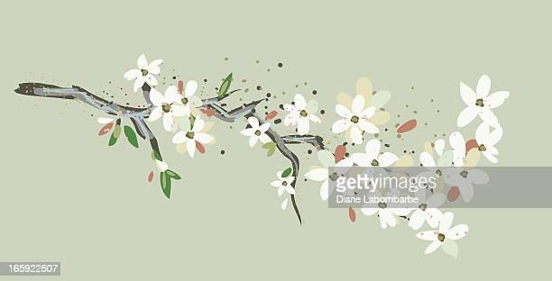 ilustraciones, imágenes clip art, dibujos animados e iconos de stock de simple cerezos en flor branch - cherry tree