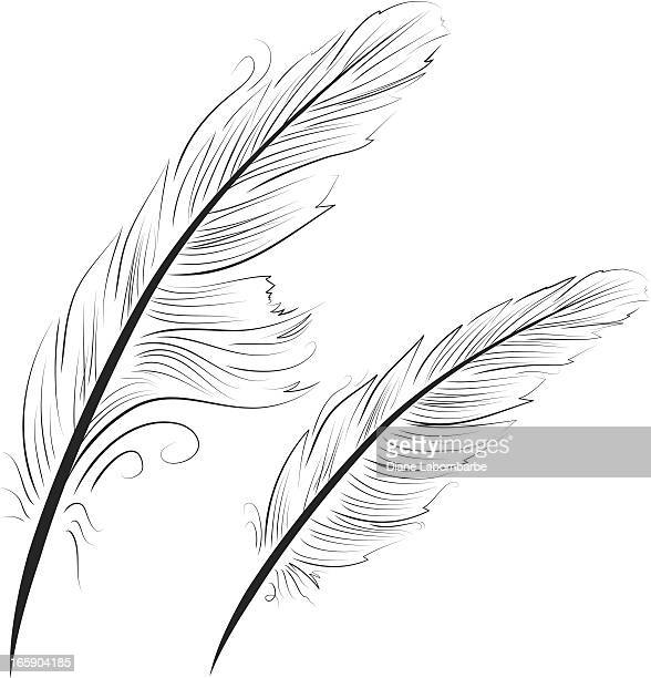 simple contour black linework feathers used for writing quills - quill pen stock illustrations