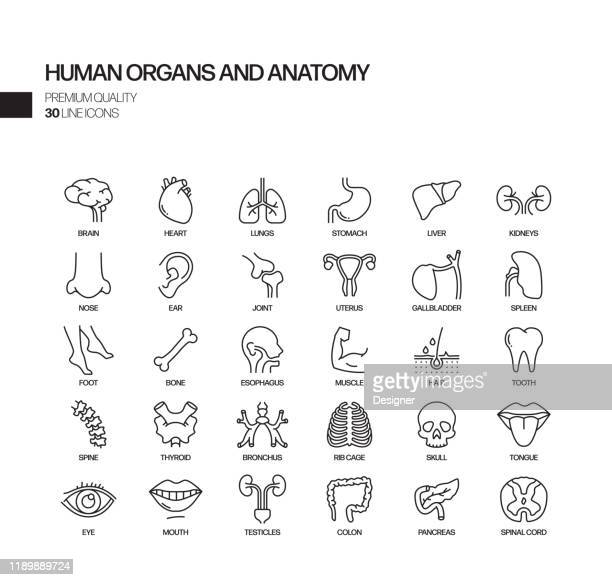 simple set of human organs and anatomy related vector line icons. outline symbol collection - human gland stock illustrations
