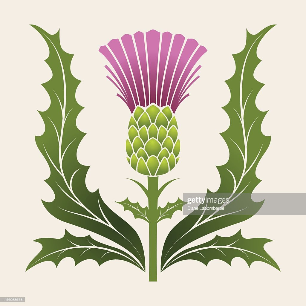 Simple Stencil Style Scottish Thistle In Pink Purple And Green : stock illustration