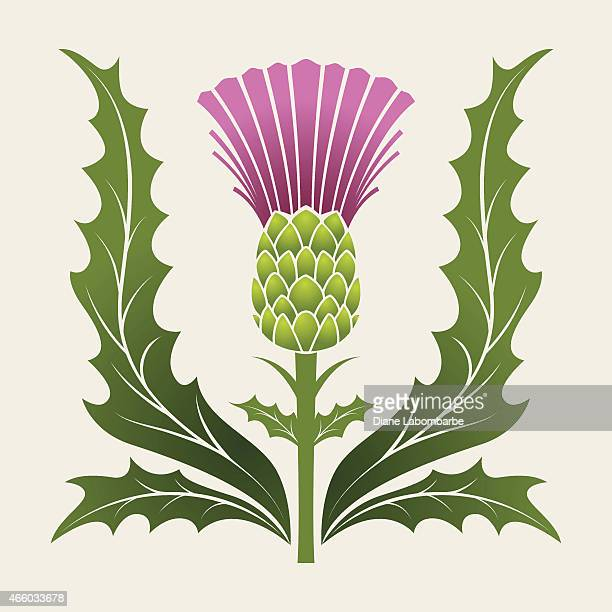 simple stencil style scottish thistle in pink purple and green - thistle stock illustrations, clip art, cartoons, & icons