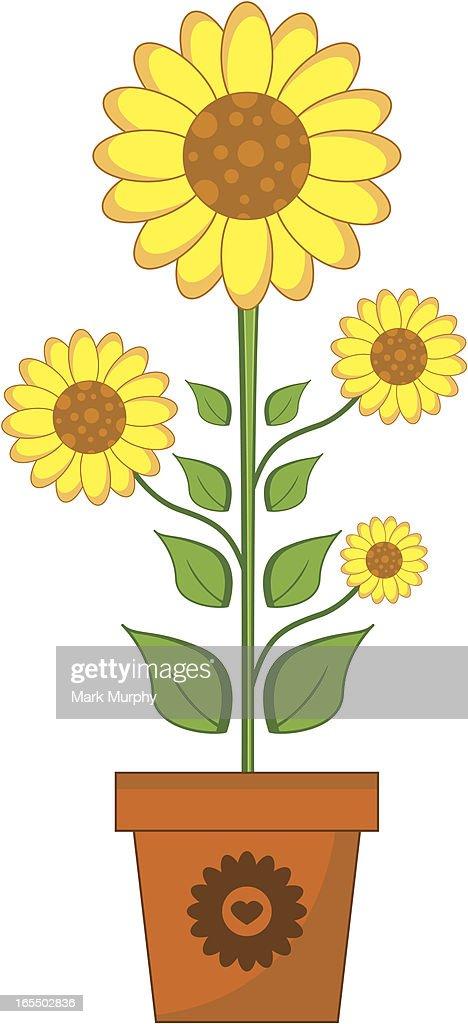 Simple Tournesol Dans Un Pot De Fleur Clipart Vectoriel Getty Images