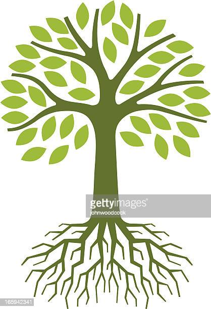 simple tree illustration - root stock illustrations, clip art, cartoons, & icons