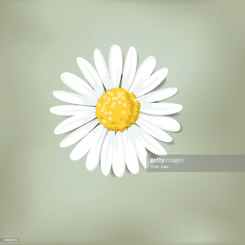 Single daisy on green background (Loves me, loves me not)