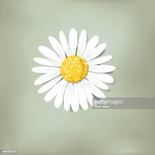 single daisy on green background (loves me, loves me not) - daisy stock illustrations, clip art, cartoons, & icons