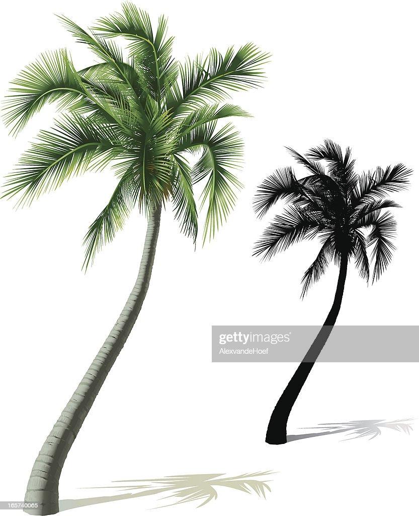 Single Palm Tree : stock illustration