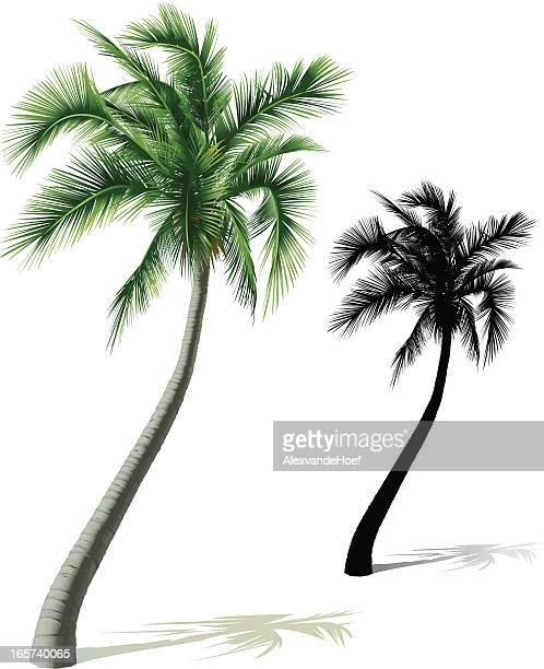 single palm tree - coconut palm tree stock illustrations, clip art, cartoons, & icons
