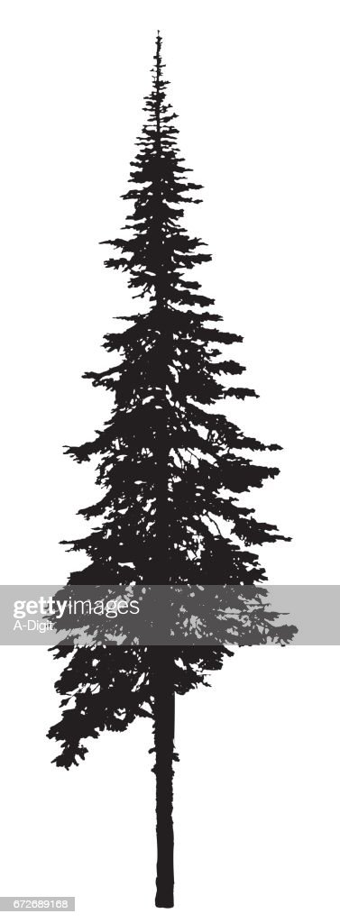 Single Pine Tree Silhouette