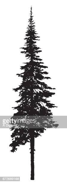 single pine tree silhouette - coniferous tree stock illustrations, clip art, cartoons, & icons