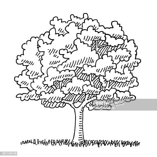 single tree summer nature drawing - deciduous tree stock illustrations, clip art, cartoons, & icons